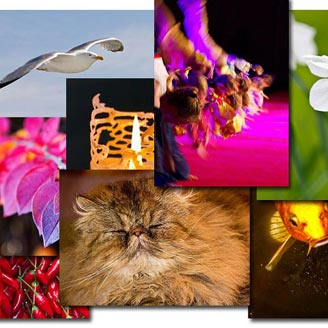 Bildbibliotek med gratis bilder – ny funktion på TrycksaksTorget
